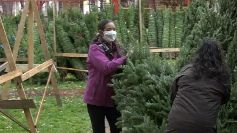 Christmas spirit arrives early at tree lot