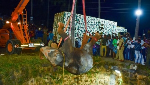 The elephant had fallen some 20 metres (70 feet) into the well, and had to be lifted out with a crane. (AFP)