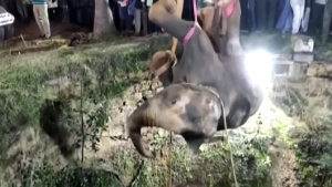 Elephant rescued from deep well in India
