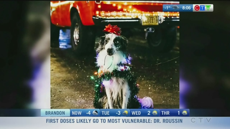 From dogs, cats or even iguanas, all animals are welcome for this year's Pooch and Pet Parade. Rachel Lagacé explains.