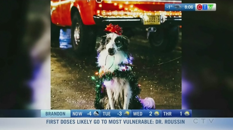 Pooch and pet parade now online