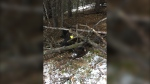 Two men are charged after a grizzly bear was illegally killed in 2018 (Fish and Wildlife)