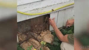 Couple finds walls of whiskey while doing renos