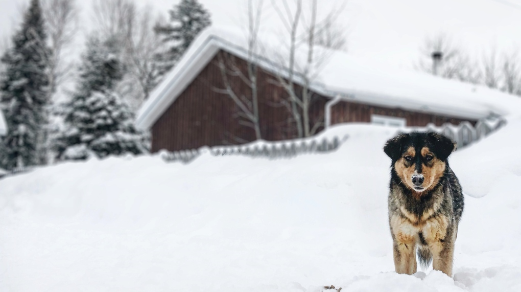 A dog in Northern Quebec