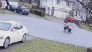 Surveillance video shows human rights activist Louis Huang being attacked outside a journalist's home in a Surrey, B.C. cul-de-sac on Nov. 25, 2020. (TheBreaker.news)