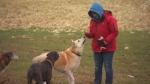 dogs Sagamok
