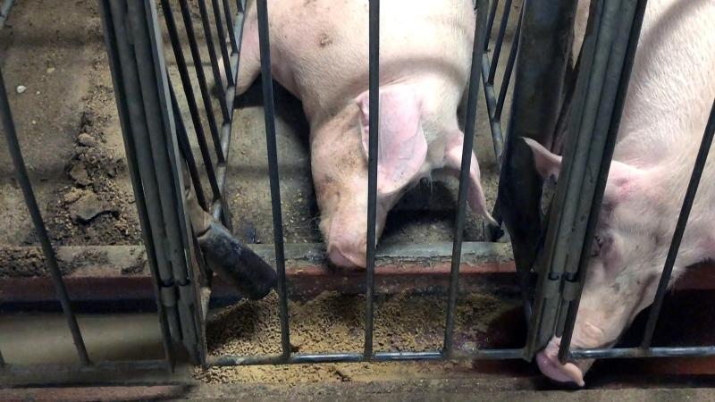Hidden-camera footage of alleged animal abuse