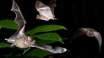 Dozens of animals died during Biodome renovation
