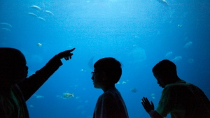 Children take a closer look at an exhibit at the Georgia Aquarium in Atlanta. (AP Photo/Jaime Henry-White, File)