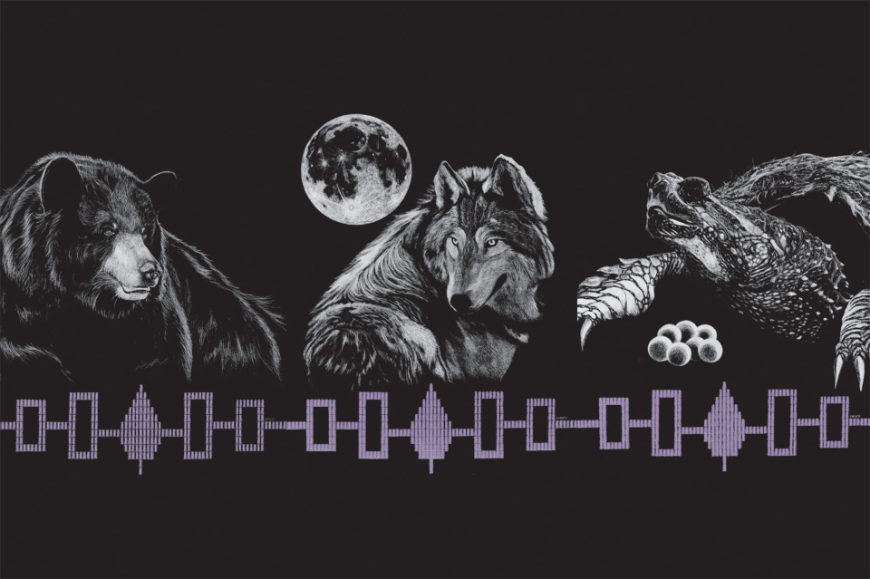 The bear, wolf and turtle are the three clans of the Kanien'keha:ka (Mohawk) nation. Kaiento:ton Kyle Williams designed the images that were transformed to lights that shine on Peel St. in Montreal. SOURCE: ISM