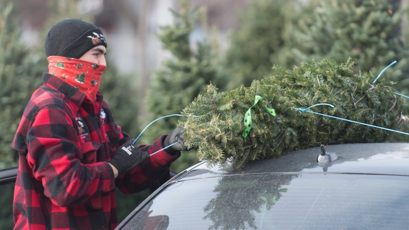 A man wears a face covering as he ties a Christmas tree to a care in Montreal, Saturday, November 28, 2020, as the COVID-19 pandemic continues in Canada and around the world. THE CANADIAN PRESS/Graham Hughes