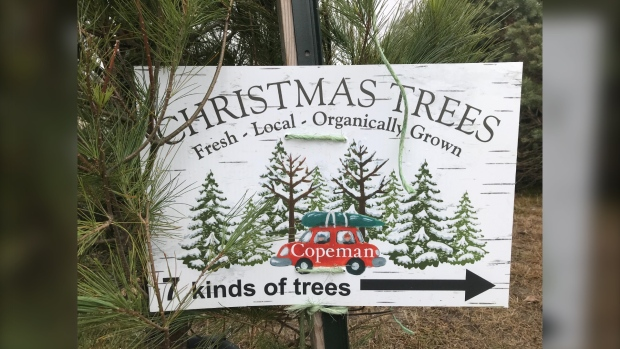 Copeman Christmas Trees, which is located just outside of Parker's Independent Grocer in North Bay, has been serving the community for over 50 years. Now with over half a century of experience, owner Bill Copeman says he has a tree for everyone this season. Nov.28/20 (Alana PIckrell/CTV News Northern Ontario)