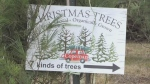 With less then a month until Christmas, the North Bay tree lot was busy on Saturday with residents getting into the holiday spirit.  Nov. 28/20 (Alana Pickrell/CTV Northern Ontario)