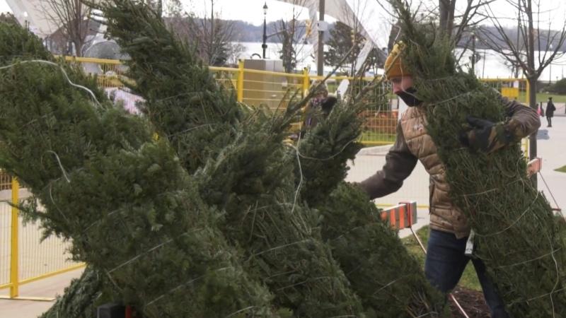 A man arranges trees for the Noella Christmas tree and wreath sale in Barrie, Ont. on Sat. Nov. 12, 2020 (Steve Mansbridge/CTV News)