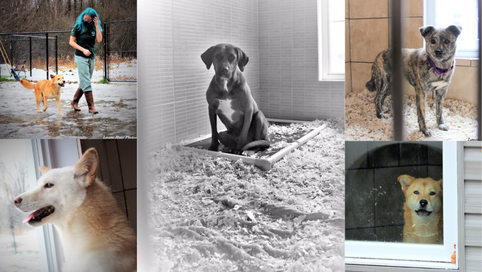 Photographer Laura Muer captures rescue dogs