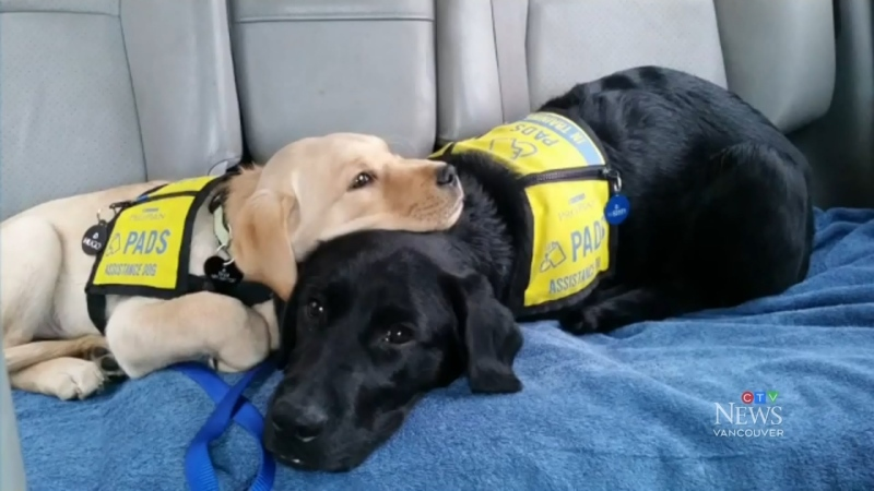 PADS guide dog graduating class of 2020