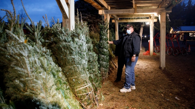 Glen and Denise Sheridan pick out a pre-cut Christmas tree while wearing personal protective masks at a Christmas Tree Farm in Egbert, Ontario, Sunday, Nov. 29, 2020. (Cole Burston/The Canadian Press)