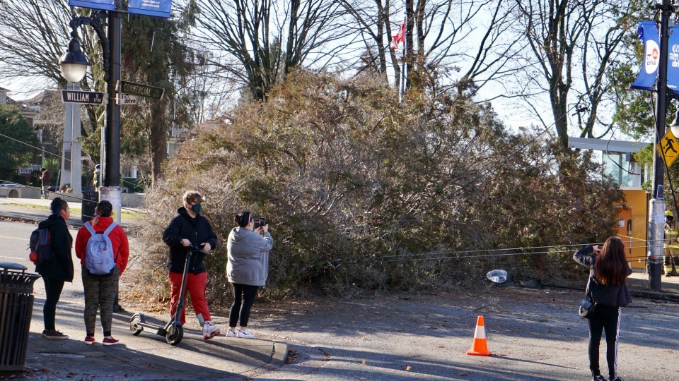 A large tree brings down trolley wires on Commercial drive at William street on Monday, Nov. 30 2020. Image posted to Twitter by Steven Godrey @itcaughtmyeye