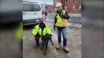 Boomer is seen with construction workers in Toronto.