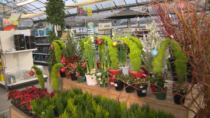 Golden Acre Home and Garden has hundreds of holidays decorations including, fresh garland, trees, wreaths, plants, and ornaments