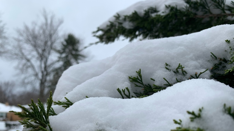 Snow covered trees, streets and yards in Windsor-Essex on Tuesday, Dec. 1, 2020. (Submitted to CTV Windsor)
