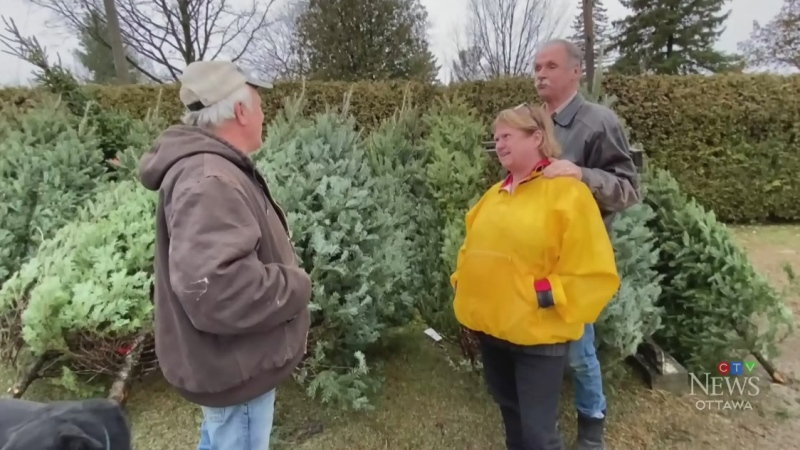 Christmas trees selling quickly