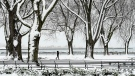 A person is seen walking through the snow covered trees on the boardwalk overlooking Lake Ontario during the COVID-19 pandemic in Toronto on Tuesday, December 1, 2020. Toronto and Peel region continue to be in lockdown. THE CANADIAN PRESS/Nathan Denette