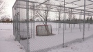 No nets at outdoor rinks