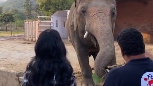 CTV National News: Loneliest elephant in the world