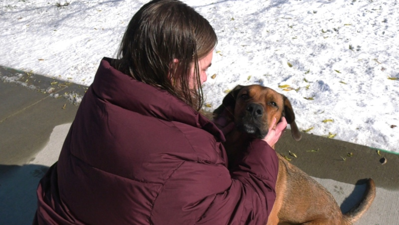 Madelaine Merner and her Rhodesian Ridgeback Hound 'Ruben' who she virtually adopted in Windsor, Ont. on Wednesday, Dec. 2, 2020. (Chris Campbell/CTV Windsor)