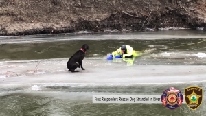 Canine safely rescued from river