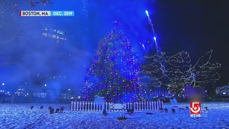 Nova Scotia tree to be lit in Boston