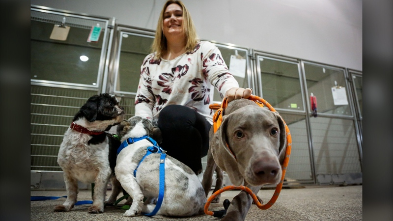 Melissa David, of Parachutes for Pets and her dogs Hudson, Jack and Charlie. (File - THE CANADIAN PRESS/Jeff McIntosh)