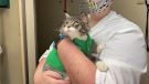 Kevin the cat has found a foster home after being found abandoned in the snow near Regina on Nov. 25, 2020. (Gareth Dillistone/CTV News)