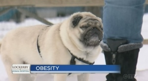 In this week's pet care segment, Jessica Gosselin finds out from veterinarian Dr. Chad Wilkinson how we can help prevent obesity in our pets