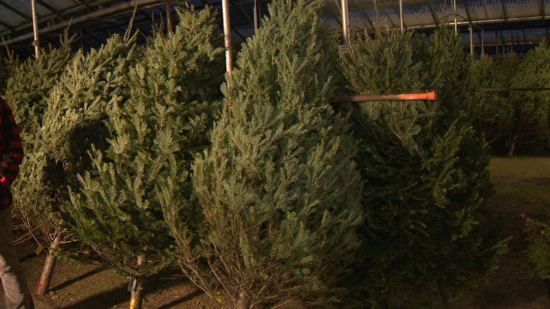 Visit Golden Acre for real holiday trimmings including trees, garland, ornaments and more.