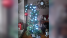 Picture This: Christmas Trees