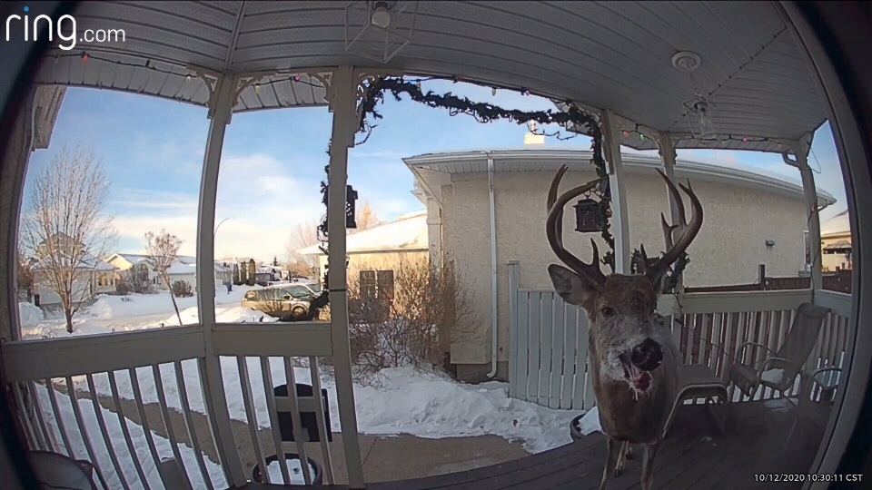 A still image from a video captured by Pam Shoults doorbell camera.