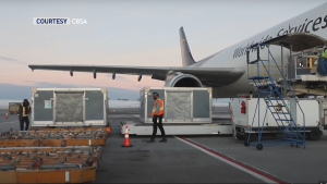 The first batch of the Pfizer COVID-19 vaccine arrived in Alberta on Dec. 11, 2020 (image: CBSA)