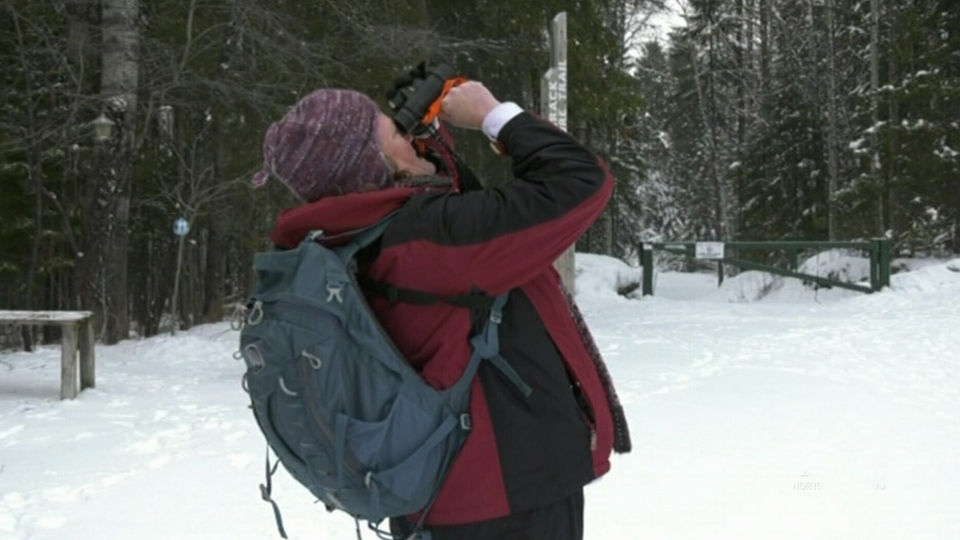 Timmins Christmas bird count celebrates 27 years