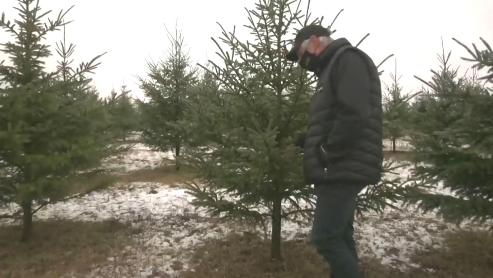 Busy weekend at local Christmas tree farm