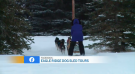 Jaden Lee-Lincoln tries out dog sledding with Eagle Ridge Dog Sled Tours