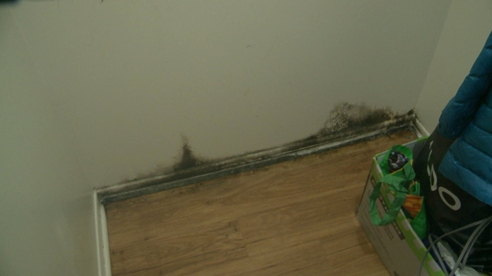 The Adeniyi family issued a plea for help on social media about the mould in their south Ottawa apartment.