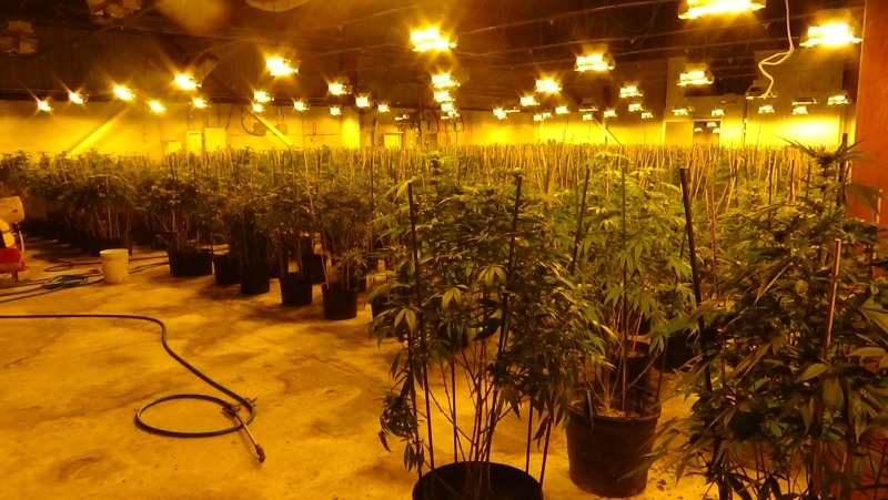 OPP seized 5,332 marihuana plants worth over $5 million dollars on Monday, January 12, 2021 (Source: London Police Services)
