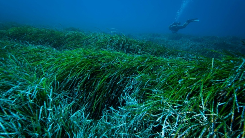 With no help from humans, seagrass balls may collect nearly 900 million plastic items in the Mediterranean alone every year. (AFP)