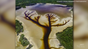 An Australian photographer documented for six months a wondrous tree shape he found a drained New South Wales lake.