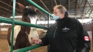 Brenda Gagnon, owner of Lazee G Ranch in Windsor, Ont., on Friday, Jan. 15, 2021. (Michelle Maluske / CTV Windsor)