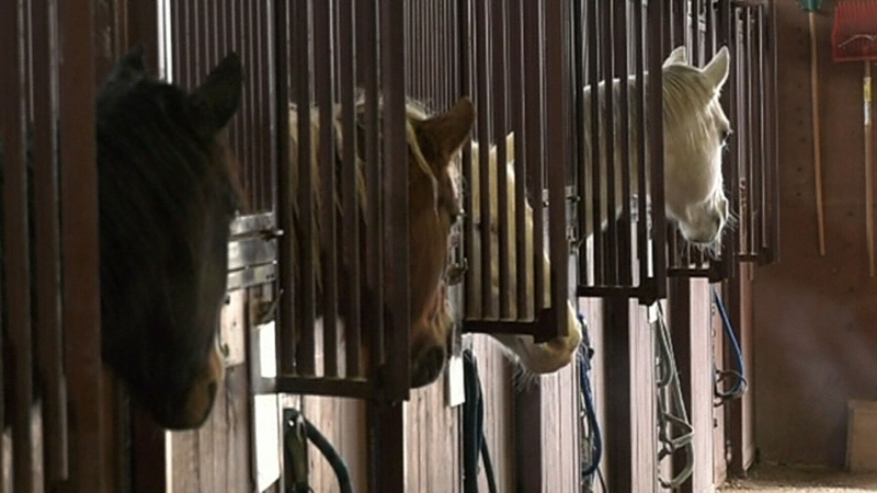 Horse businesses struggle amid pandemic