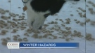 Look out for these pet hazards this winter