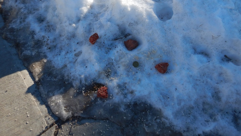 Airdrie RCMP found pieces of meat, rice and loonies at several locations throughout a southeast community Saturday. They are working on finding out who is behind the suspicious activity. (Supplied/RCMP)